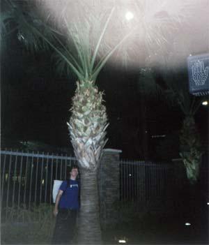 Mon ami le palmier