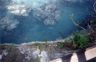 Banc de coraux