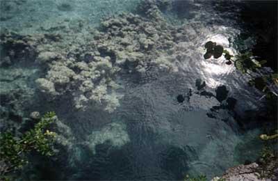 Toujours des coraux dans le bassin