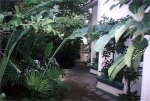 Photos de la cours de la villa à Cozumel