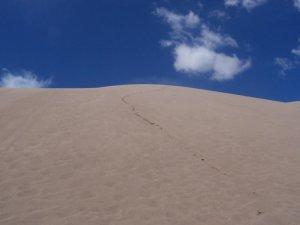 Les traces dans le sable