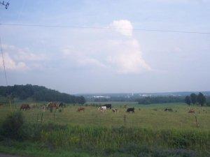L'Ontario et les vaches ontariennes
