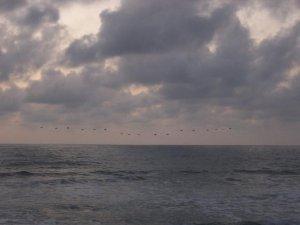 Oiseaux au dessus de la mer